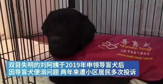 中国留学生研发机器导盲犬可实现批量生产价格有望低于一万美元