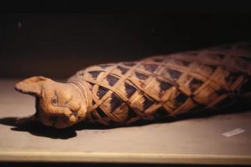古埃及人为什么对猫如此着迷