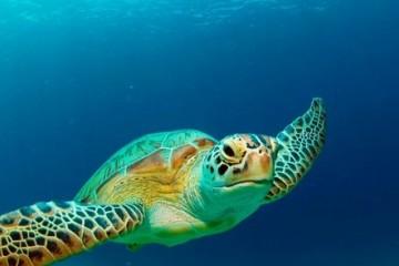 新冠疫情对海龟保护区的深远影响——喜忧参半