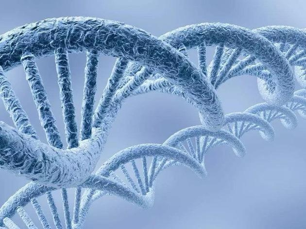 为什么有的人会长命百岁身体更有效的修复DNA